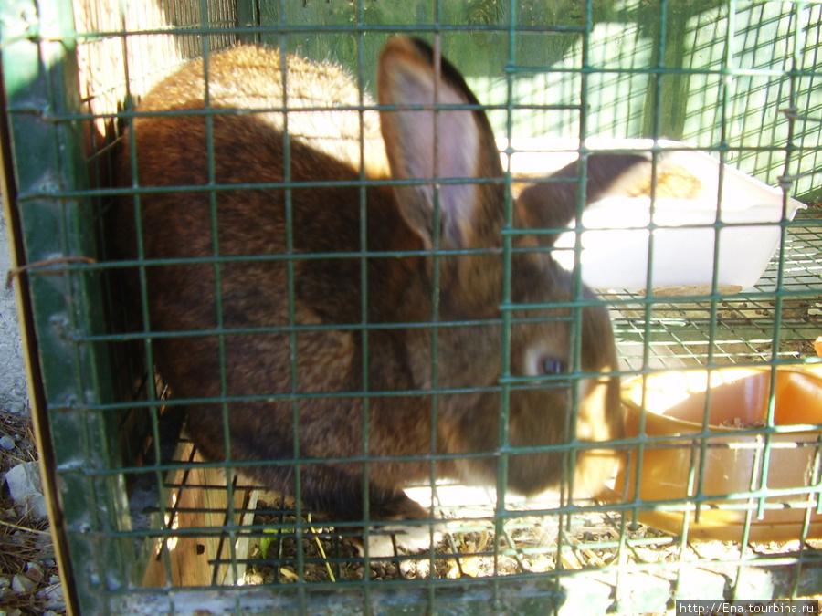 Сентябрь 2007. Экскурсия в Геленджик. Сафари-парк. Кролик