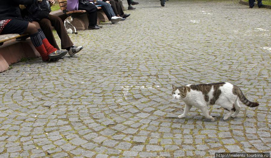 Кот Сулейман гуляет по парку