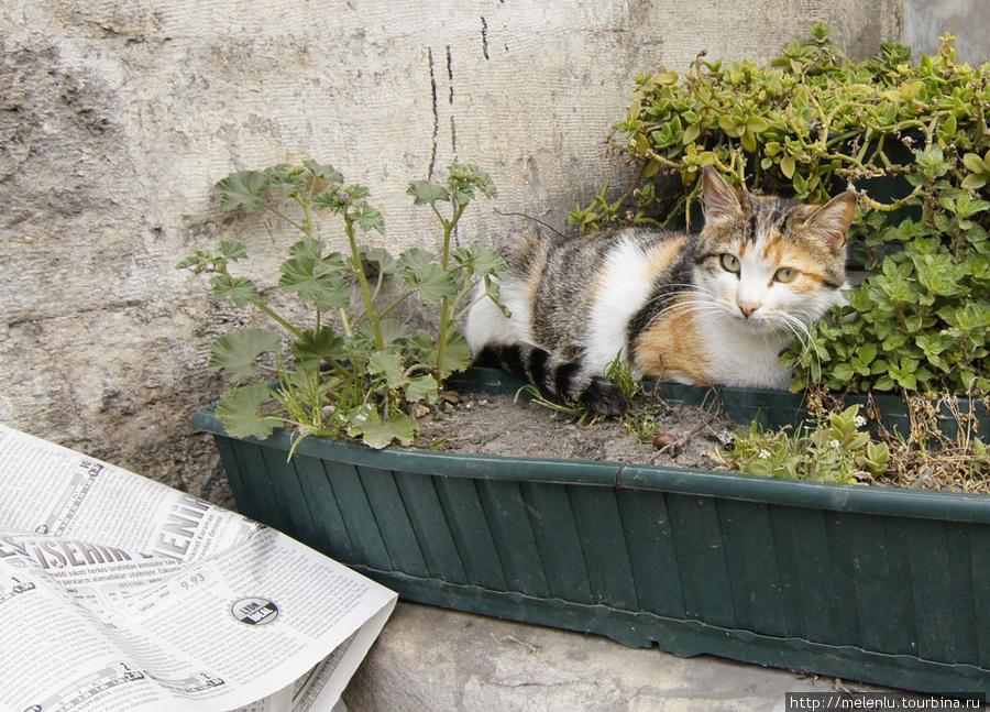 Кот Кемаль читает утреннюю газету