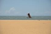 Пляж в Негомбо. На катамаране, под  парусом (лодка-орува) ланкийские моряки выходят в открытое море. Хоть эта конструкция и кажется не слишком надежной, она проверена не веками — тысячами лет.