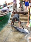 свежепойманный тунец