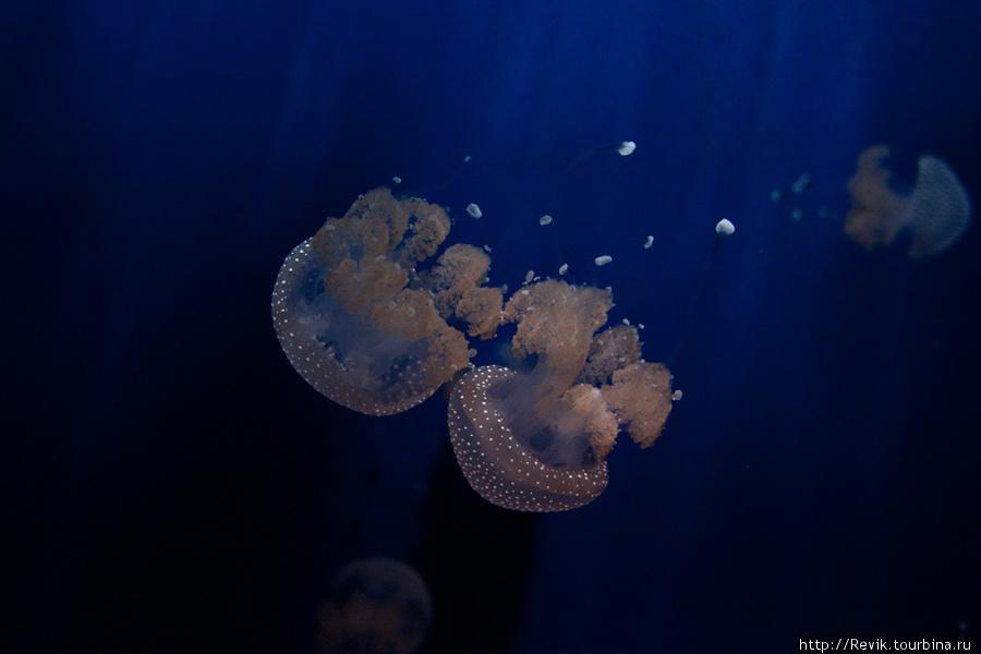 В аквариуме Генуи