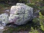 А это черепаха.