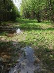 Дорога к Златоусту оказалась хуже, чем к Круглице (шел по другой тропе) — камни, лужи, ручьи и ничего интересного, одни леса. Заблудился два раза, люди вывели.