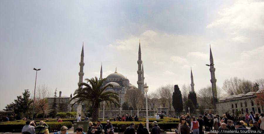 Пальмы в парке у Голубой мечети