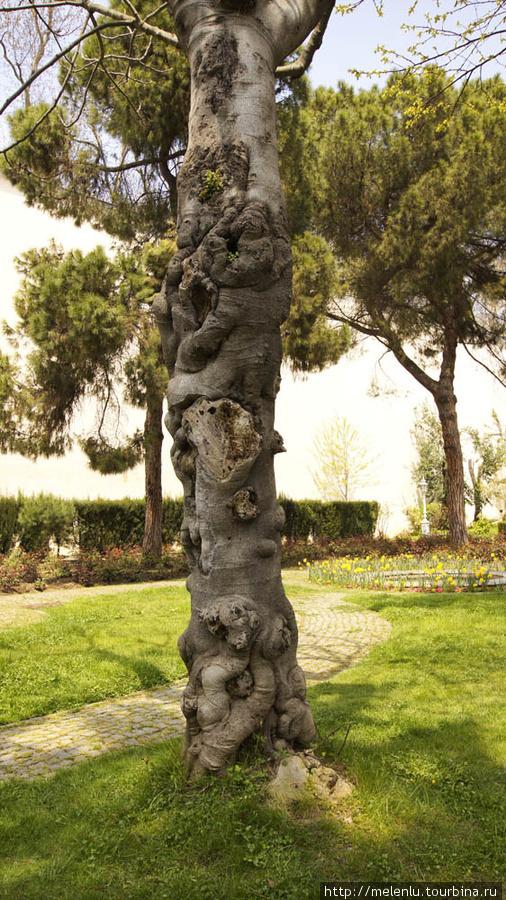 кузявое дерево
