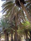 пальм много, и они создают достаточно густую тень