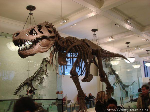 Американский музей естественной истории Нью-Йорк, CША
