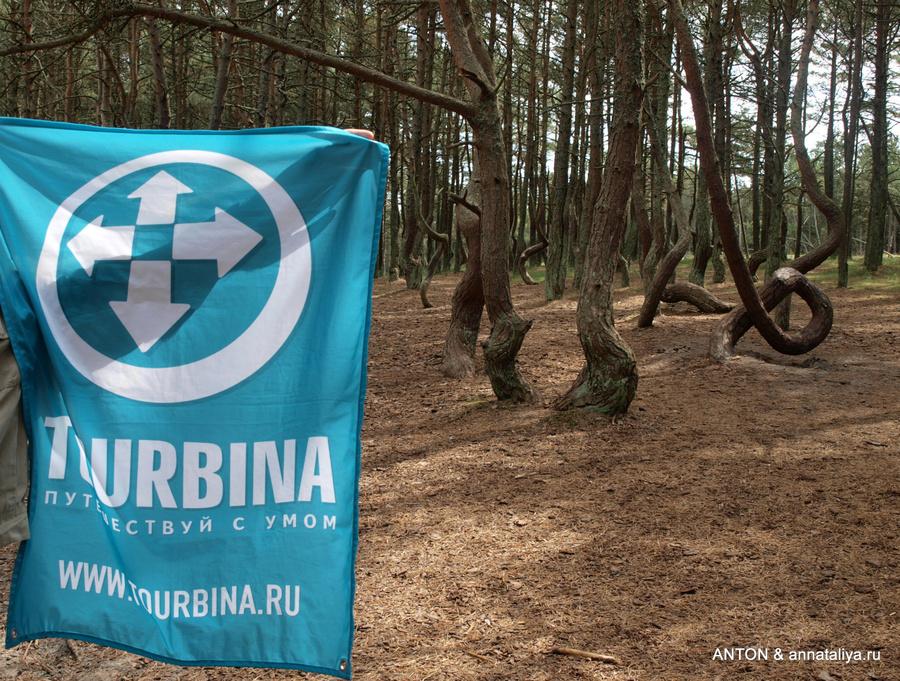 Куршская Коса. Флаг Турбины в Танцующем лесу
