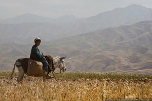 В Афганистане никогда небыло особо развитого сельского хозяйства. В суровых климатических условиях, при недостатке земель, крестьяне едва могли прокормить себя сами. Советский Союз пытался развить какую-то промышленность, но с уходом наших войск Афганистан стремительно скатился обратно к своему статусу аграрной страны.