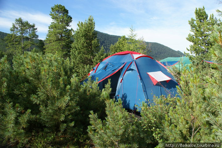 Палатки в стланике