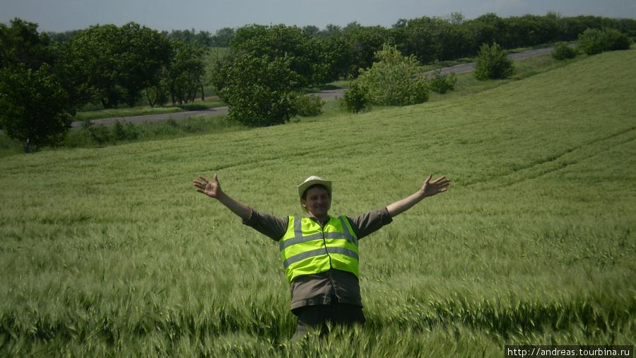 Хлебное поле.Красота то какая!
