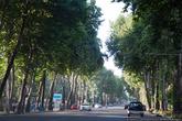 Очень много деревьев. Жалко власти Таджикистана сносят исторический центр. Через несколько лет Душанбе из столицы советской республики превратится в провинциальный китайский городок.
