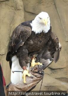 Символ Америки.