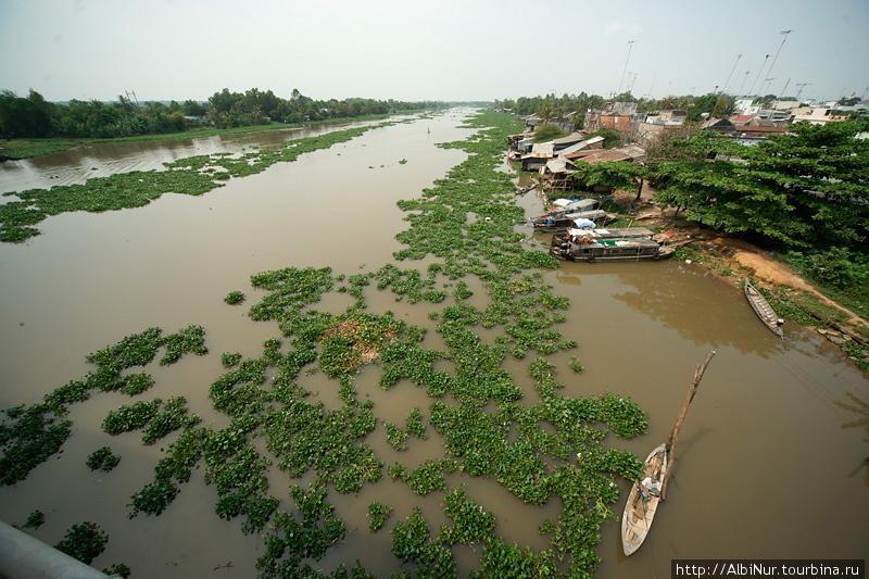 Река покрыта ковром плавучих растений, двигающимся по течению. Так что если смотреть с моста вниз, кажется что едешь на каком-то огромном транспорте по болоту.