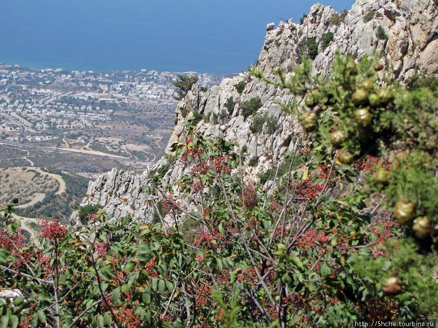 Вид с гор на Кирению