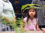 Здесь есть маленький рынок растений — можно купить совершенно необычные существа типа Pakis Monyet, например