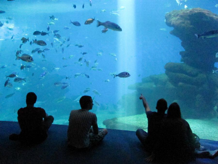 Большой аквариум Big Blue