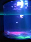 Эта гигантская колонна-колба с медузами — самое небычное зрелище!