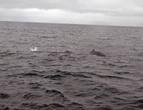 И наш преследуемый встретил под водой еще одного. Мы гнались за ним несколько минут, второй, будь он сразу рядом, был бы обнаружен раньше