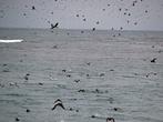 Сперва нам приносил удовольствие вид тысяч, летающих по кругу, птиц.