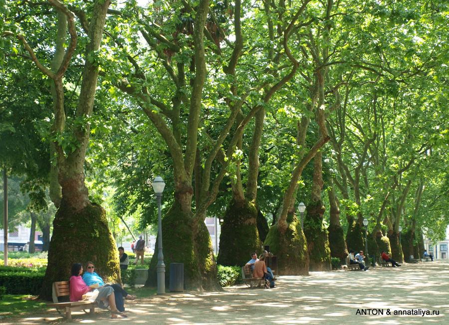 Странные деревья в городском парке