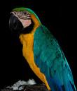 Эта птица живет дома у одного из подвозившего меня водителя. Иностранцы тут редки, так что местные жители с радостью готовы пригласить путника в гости.
