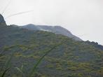 Вулканические почвы очень плодородны