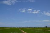 Рисовые поля Дельты.