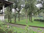 В 15 минутах ходьбы от парка у озера — большой ботанический сад. Там можно гулять часами, просто валяться на траве.