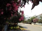 Цветущая улица