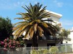 Пальма перед домом