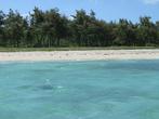 Песчаный пляж с соснам