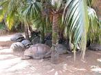 Валяющиеся черепахи