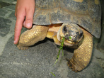 Детский сад для черепах