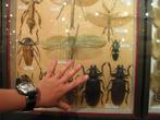 Инсектарий. Офигенская коллекция насекомых