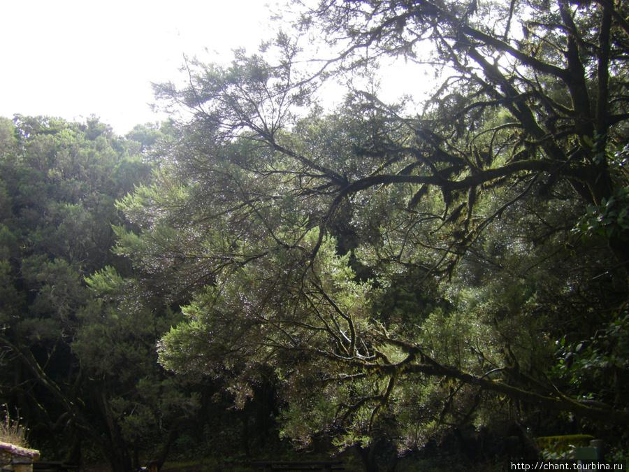 Облако в ветвях1