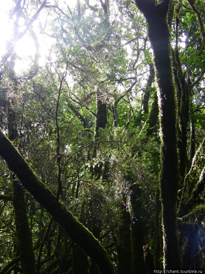 Лес реликтовый