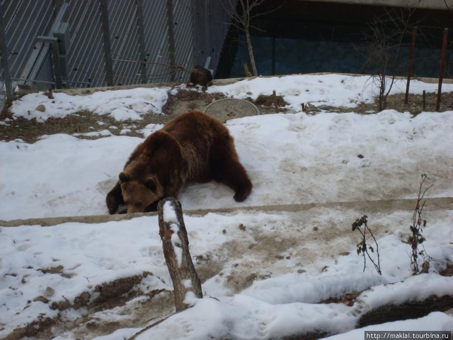 Берн. Медвежья яма.