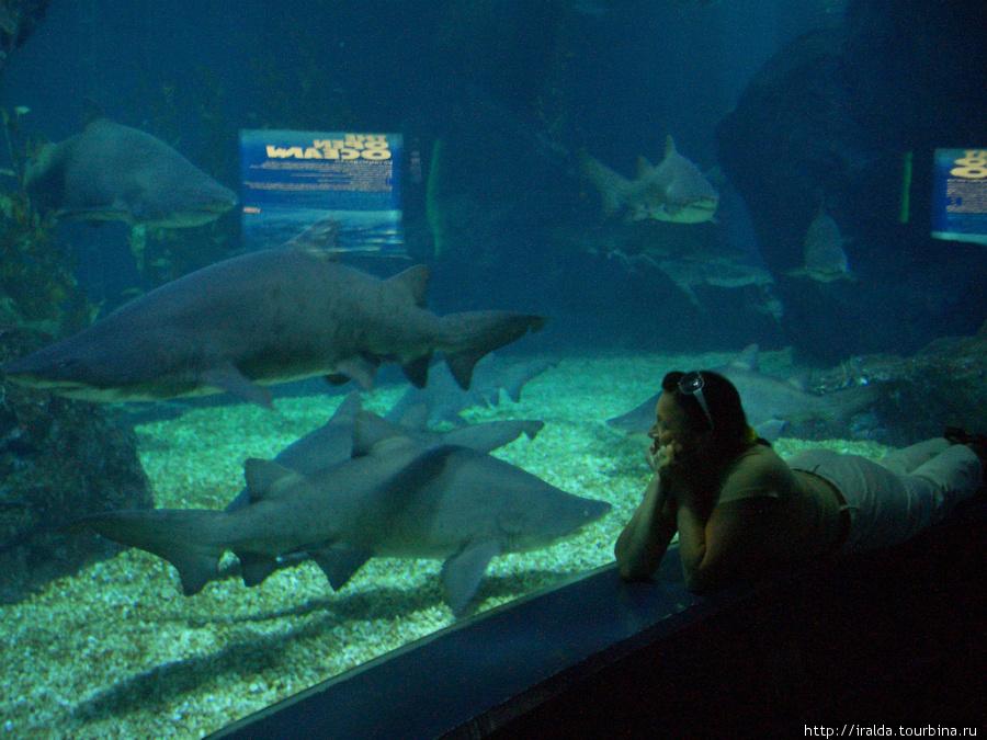 Океанариум.Место, где чувствуешь себя и ребенком (радуешься, удивляешься, восхищаешься одновременно) и частью огромного мира