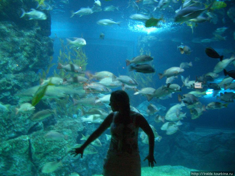 В торговом центре Siam  Paragon находится самый крупный в Азии океанариум