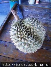 Дуриан. Один из самых экзотических плодов, называемый еще