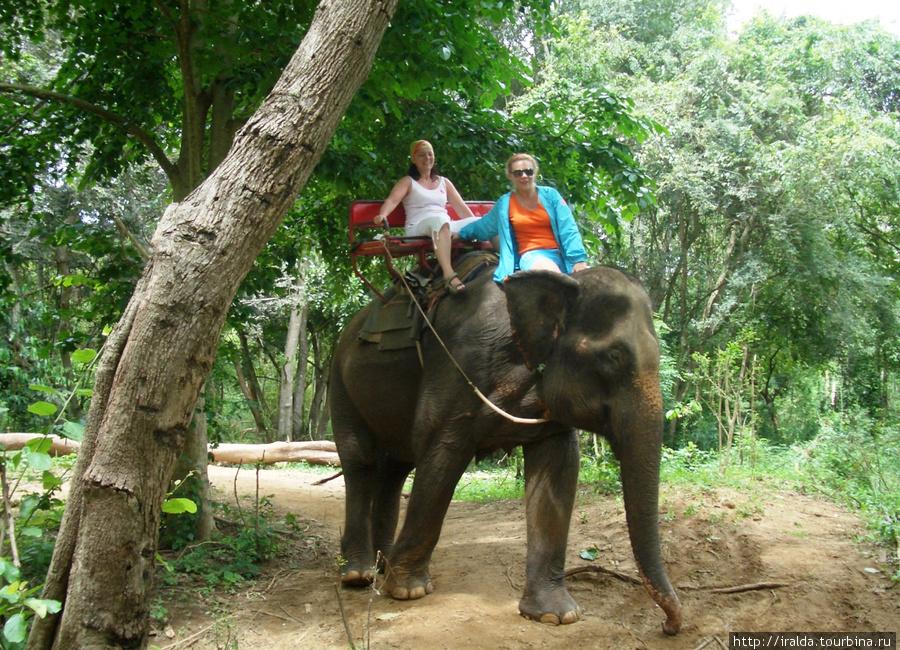 Один из этих слонов был нашим спутником по джунглям, а вернее мы его спутники