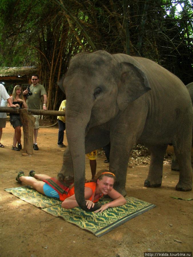 На этом развлечения со слонами не закончились. Было небольшое шоу с маленькими слонами, во время которого Танюша принимала слоновий массаж. Говорит, что было достаточно чувствительное похлопывание ногой слоника по попке. Потом их кормили бананами и поили молоком. Очень умилительно!