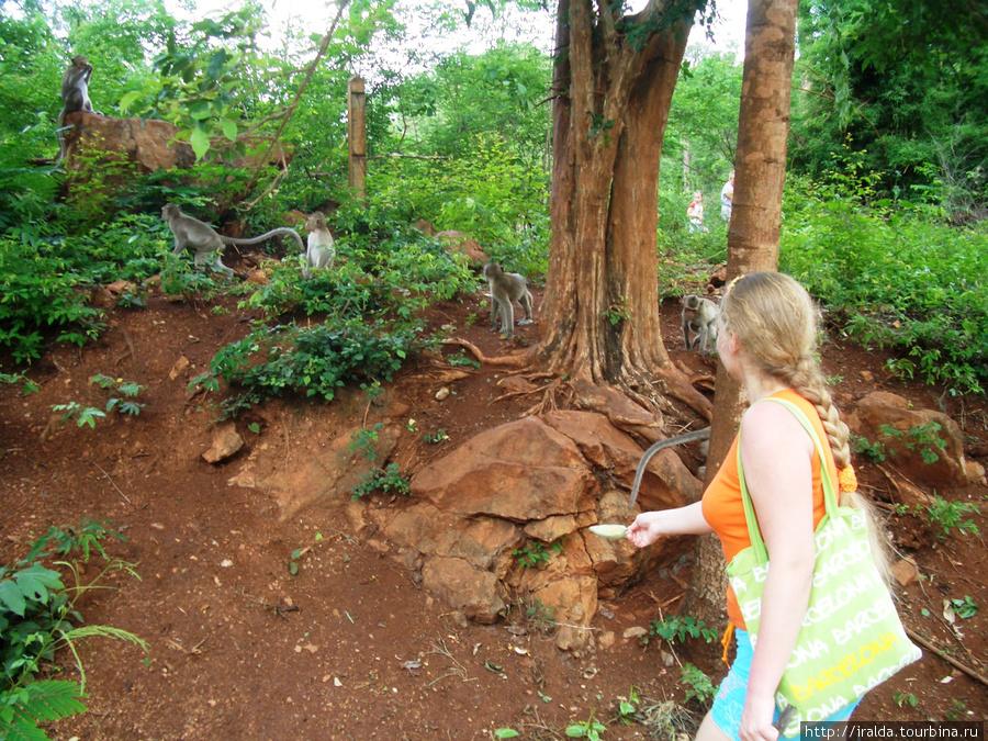 Делаем остановку в джунглях, куда обычно (прикормили уже) приходят обезьяны, если в это время у них нет других, более неотложных дел.
