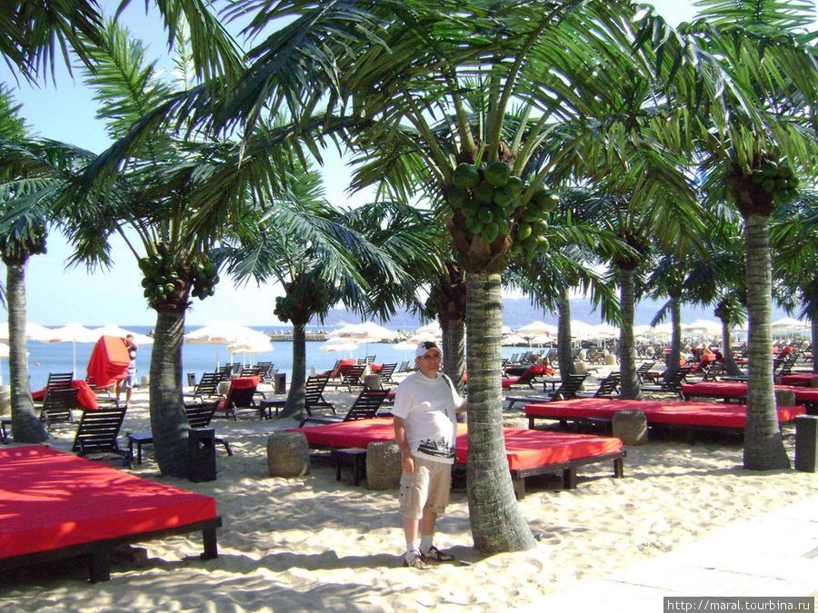 Вполне приличный пляж с мелкозернистым песочком, пальмами, зонтиками и шезлонгами