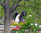 В парке застали фотосессию брачующихся...