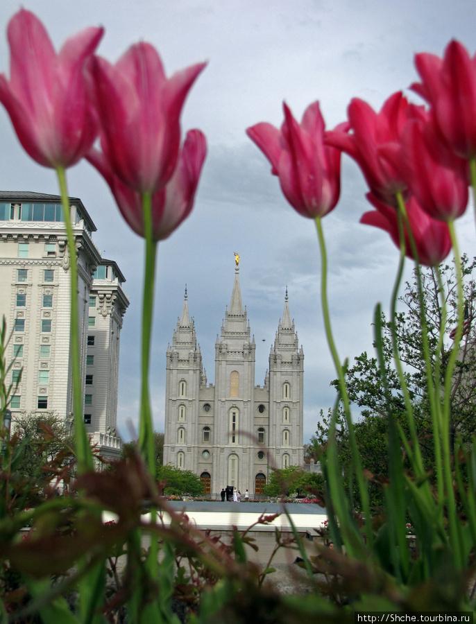 Цветущий парк у Храма Иисуса Христа. А мормоны - молодцы Солт-Лэйк-Сити, Соединенные Штаты Америки