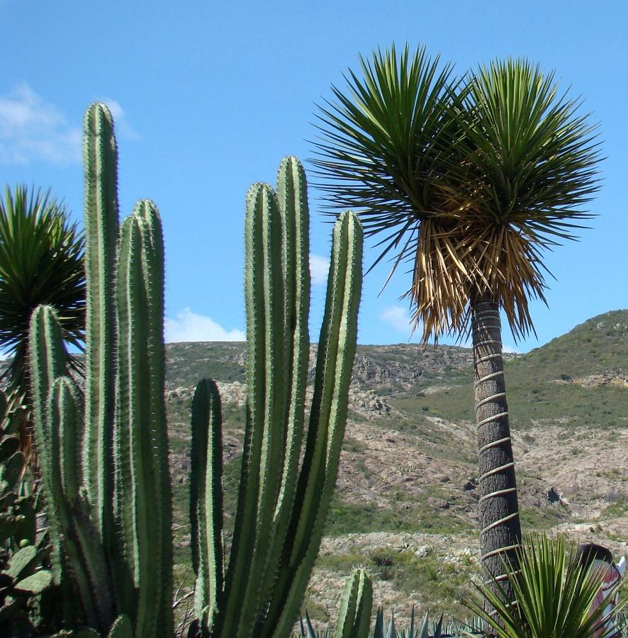 Мексика картинки кактус