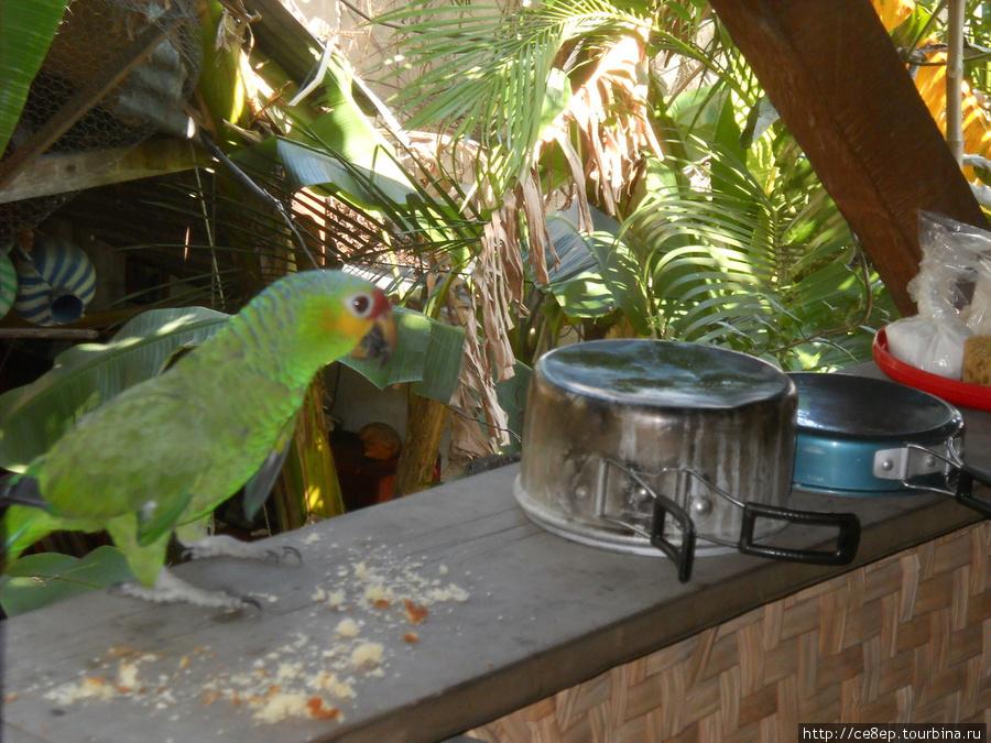 страница картинка попугай за окном надеясь свои силы